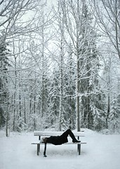 (JenniPenni) Tags: life winter snow cold home scarf finland bench moments quiet dreams rest 365 simple jennipenni