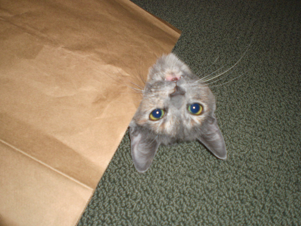 Paper bag monster!