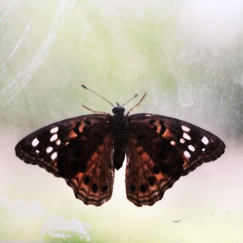Moth:  September 12, 2009