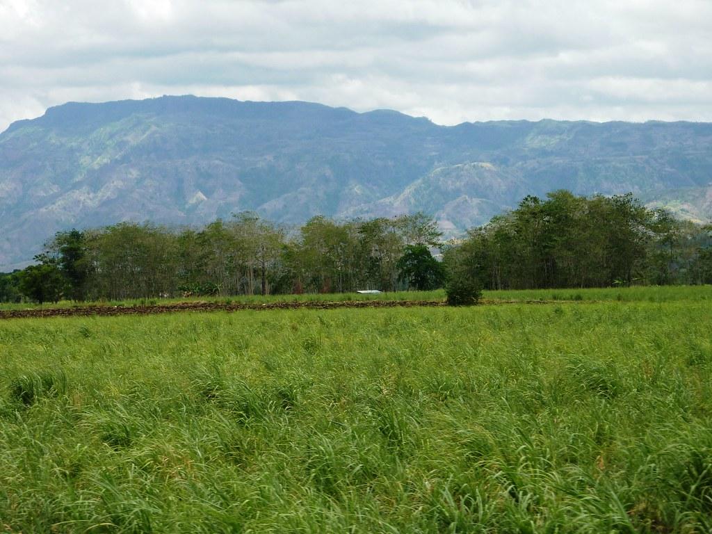 Negros-Dumaguete-Mabinay-Bacolod (102)