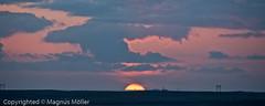 Sunset ash