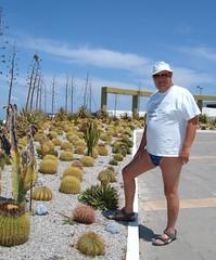 The Cactus Garden at the Kos Palace Hotel (pj's memories) Tags: cactus male garden kos greece briefs slip speedo vpl brief speedos bulge tingaki tanthru kiniki bearinspeedos huskyinspeedos bearinbikinibrief