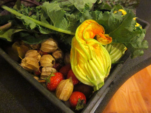 squash blossoms & ground cherries
