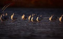 birdy... (persuasiveview) Tags: greatoceanroad lorne anglesea