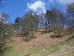 104_2787 ( Ash Malcolm ) Tags: trees sky scotland rocks sheep glasgow glen hills gorge milton campsie lennoxtown