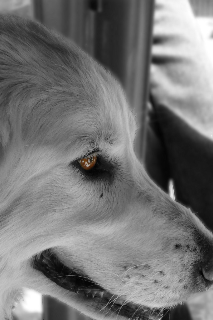 Panelles Dog