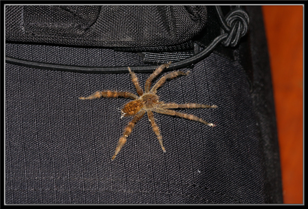 Spider On My Camera Bag (on my bed)
