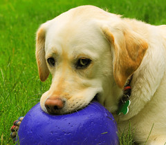 I want to pop this ball