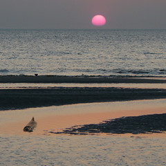 A seal at rest on a sandbank (Bn) Tags: waddenzee zonsondergang topf50 topf100 soe sandbanks pinksunset texel waddensea scholekster blueribbonwinner commonseal 100faves 50faves phocavitulina flickrsbest xxxooo 35faves abigfave gewonezeehond platinumphoto aplusphoto ultimateshot holidaysvacanzeurlaub diamondclassphotographer megashot brilliant~eye~jewel theperfectphotographer goldstaraward earthmarvels50earthfaves