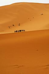Caravan (elosoenpersona) Tags: africa people sahara geotagged desert gente dunes dune camel morocco desierto caravan duna marruecos camels soe dunas caravana merzouga dromedarios supershot abigfave impressedbeauty diamondclassphotographer flickrdiamond elosoenpersona goldstaraward geoposicionada
