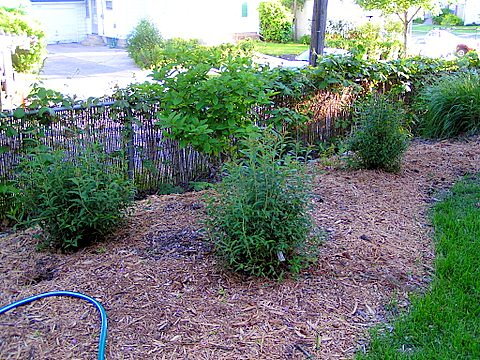 Backyard Garden 2006