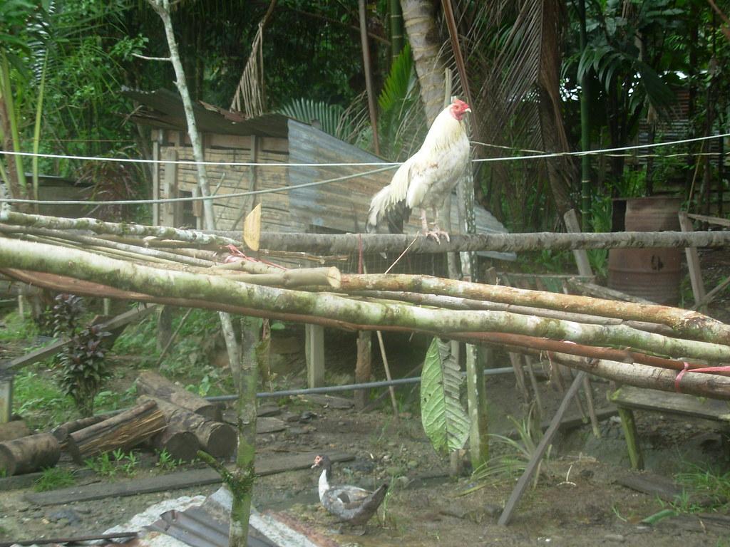 Sarawak-Belaga-LHouses (169)
