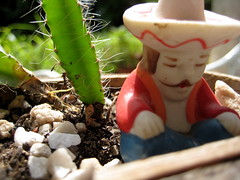 jose (parttimefarm) Tags: plants brasil tia rocks sombrero figurine chacara lu echapora