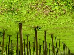 colonne (fred.dafred) Tags: verde green catchycolors pillar erba column pilastro pilastri pombia estremità albericapovolti