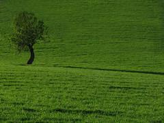 Verde (Stranju) Tags: sardegna verde green grass sardina erba albero prato supergrass marmilla