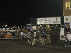 PBR 014 (can_chaser) Tags: rodeo pbr bullriding rodeoclown muttonbustin flintrasmussen