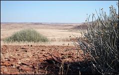 Red Planet (It's Stefan) Tags: africa red plant desert stones vegetation wilderness namibia  wideopenspace  damaraland vastexpanses  kunenen