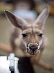 Tom Price Roos (C) 2008