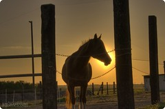 |...horse in sunset HDR (schujens : )) Tags: sunset horse sol nature sonnenuntergang sonne pferd unforgettable soe hdr breathtaking   hst solen galope goldenglobe  naturen firstquality pictures flickrsbest  golddragon frontpageexplore abigfave vision1000 goldmedalwinner platinumphoto anawesomeshot hsten colorphotoaward superaplus aplusphoto ultimateshot visiongroup ysplix naturewatcher colourartaward platinumheartaward theperfectphotographer goldstaraward damniwishidtakenthat flickrlovers breathtakinggoldaward vision100 photoartbloggroup artofimages nergng grner bestcaptureaoi