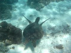 Torquoise Bay (C) 2008