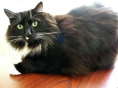 Lucky 2 (DebDubya) Tags: cats chat gato kitties felines katze gatto panasonicdmcfz10 deborahwillard deborahwillarddesign