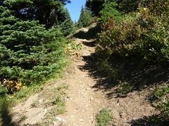 Final push to Shriner Peak Lookout.