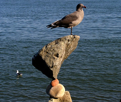 """Help - help . . . Bill glued Me on the Rocks"" . . . (billbalance) Tags: bicul goldsealofquality photosthatrock photographergonewild ilovemypict"