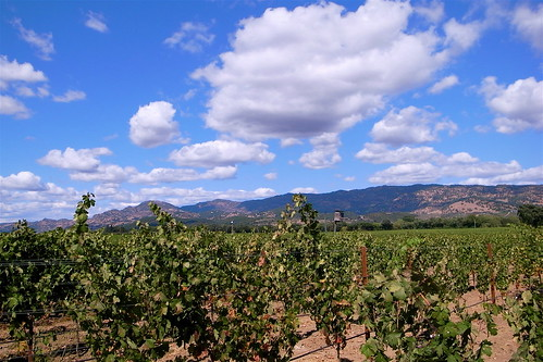 Zin Vineyard and Skies
