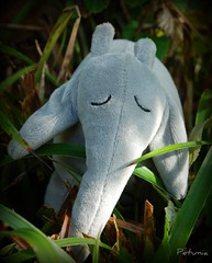 Elefantsafari 4