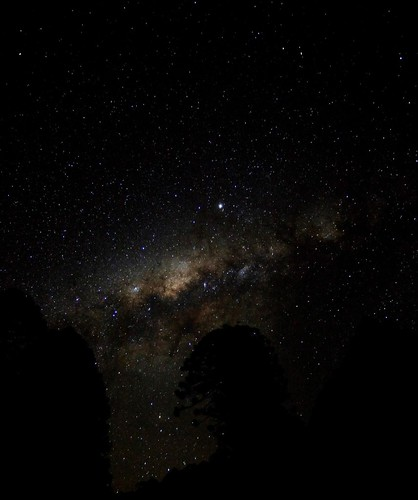 Night Sky and Bunya Pine