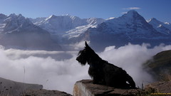 Rasmus in the Swiss alps 1 (Lars Odemark) Tags: leica snow alps clouds europe hiking swiss scottish terrier grindelwald scottie rasmus dlux3
