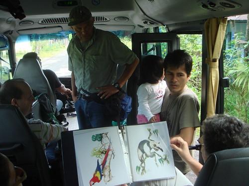 MIgración Gavilanes, Kekoldi, Limòn, 2008
