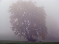 Novembertag (7) ... (Martin Volpert) Tags: tree fog germany deutschland nebel hessen árbol bäume allemagne niebla baum brouillard limes hesse pohlheim watzenbornsteinberg mavo43