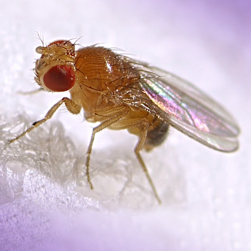 how do you get rid of fruit flies are fruits healthy