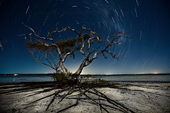 Tree alive at night (Garry - www.visionandimagination.com) Tags: longexposure nightphotography tree eye halloween nature water night canon stars landscape march sand exposure nightscape nocturnal oz earth ambientlight contest roots australia mangrove creativecommons 5d astronomy aus garry milkyway startrail noisereduction bostoncom opl treesubject flickrdiamond celestialpole ef1635mmf28liiusm theperfectphotographer thesecretlifeoftrees multimegashot alemdagqualityonlyclub alemdaggoldenaward visionandimagination celestialpoint wwwvisionandimaginationcom dpslongexposure