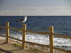 Mirando al mar (mutenclon) Tags: espaa costa spain almeria cabodegata cortijo 1260 genoveses nijar uro monsul
