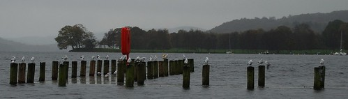 Gulls at Lake Coniston