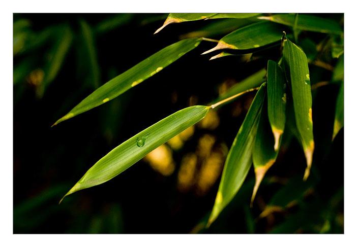 http://farm4.static.flickr.com/3189/3022264619_5b35da4351_o.jpg