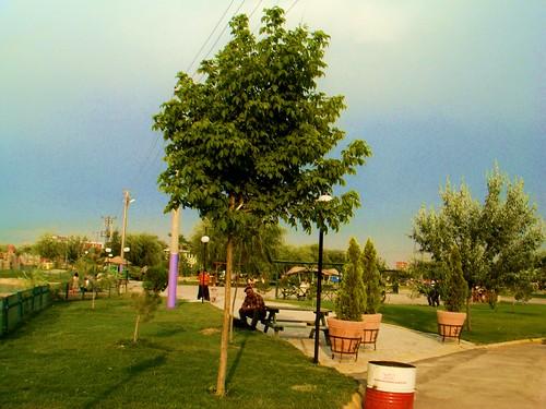parkta bir yalnız yaşlı adam resmi