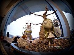 fear of the queen ... (simis) Tags: window stone miniature fisheye photowalk discoball 8mm atwork gravel banzai fromarchives