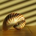 Nautilus in venetian light beams (StephenCotterellPhotography)