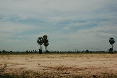 Flood Plain Of The Mekong
