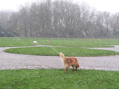 The dog park in Amsterdam