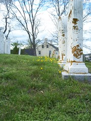 008 (coropaul67) Tags: massachusetts mossy gravestones buttercups