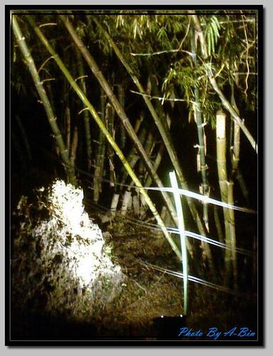 Bamboo grove 04