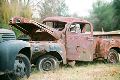 decaying ford trucks (Dave* Seven One) Tags: old rot history classic ford abandoned nature neglect truck ga vintage georgia rust time decay farm 1940 rusty pickup f1 forgotten past dents fallingapart fomoco farmtruck abandonedtrucks