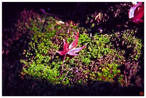 Moss & Leaf  081209 #01