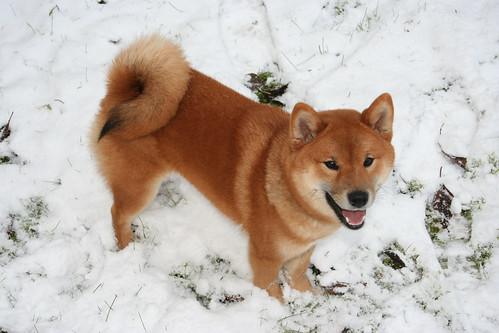 Trixie-snow