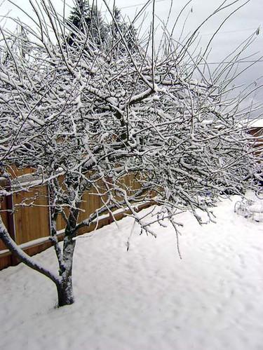 snow day #2 2008