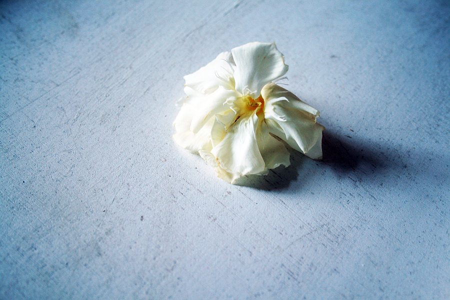 whiteorchid 023